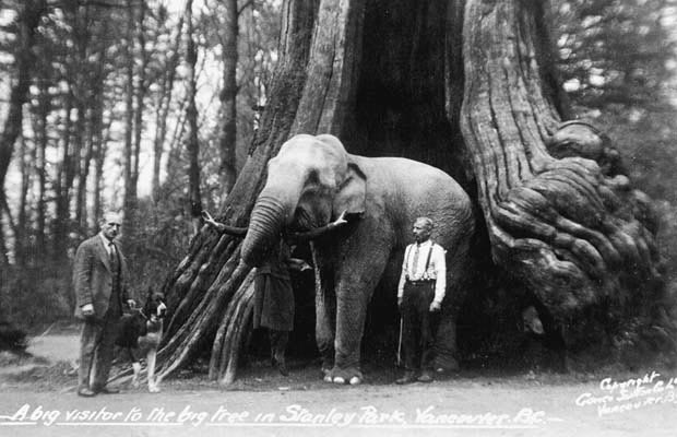 An elephant stands in a hollow tree.