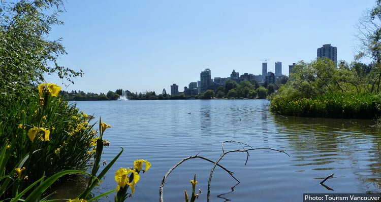 A view of a lagoon through wildflowers towards downtown Vancouver.