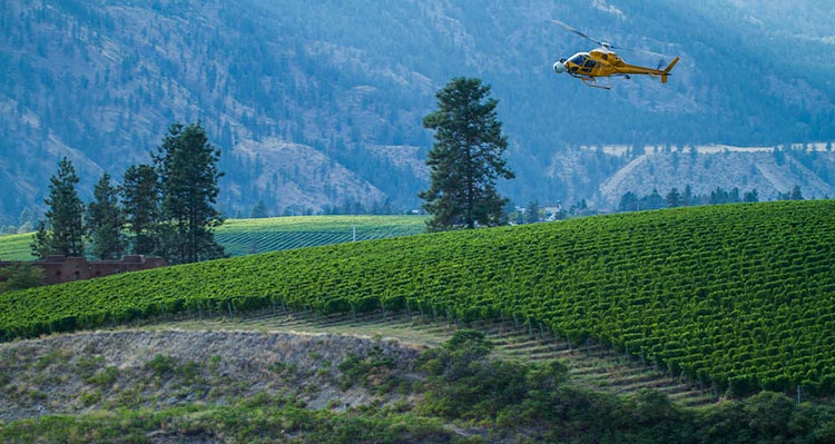 A yellow helicopter flies over a green vineyard