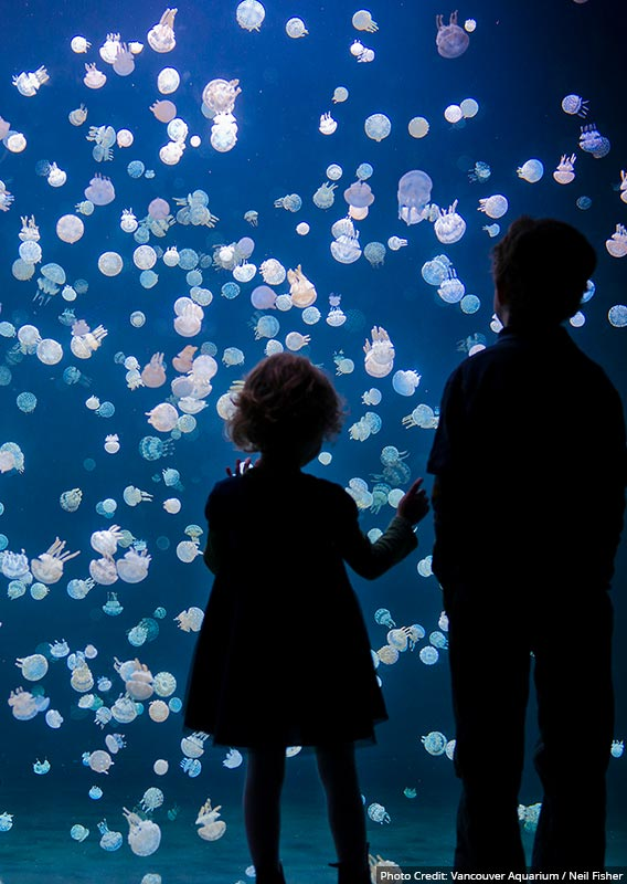 Two children stand at an aquarium of sea jellies.